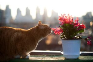 cat-pet-flowers
